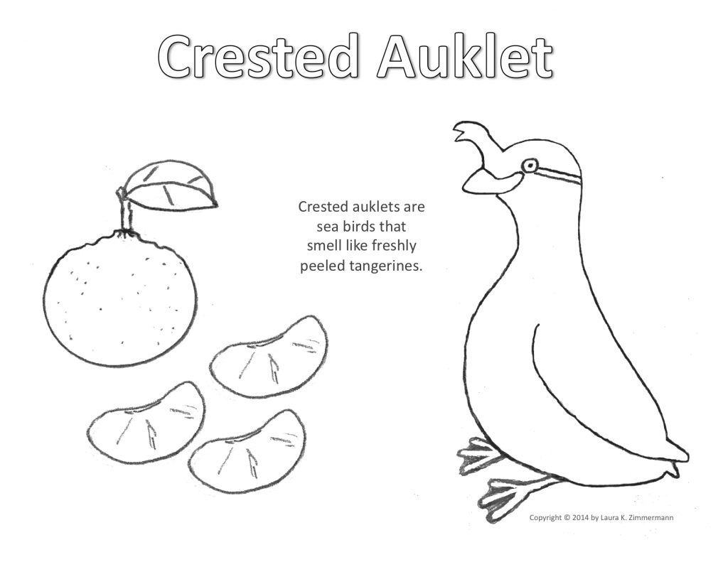 Crested Auklet Coloring Page copyright Laura K. Zimmermann
