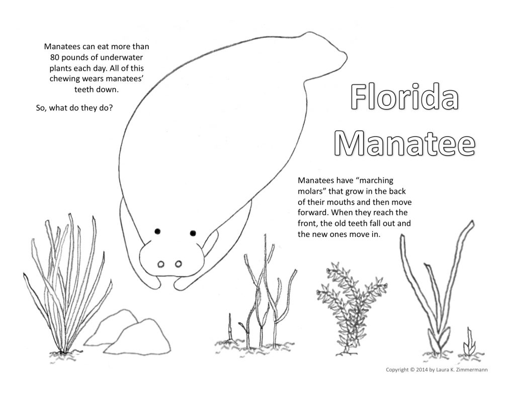 Manatee Coloring Page copyright Laura K. Zimmerma